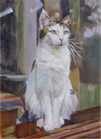 Pet Portraits Tim hall